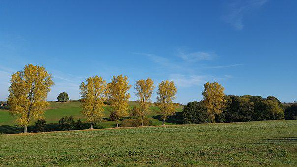 Tree, Landscape, Autumn, In The Free, Nature, Land