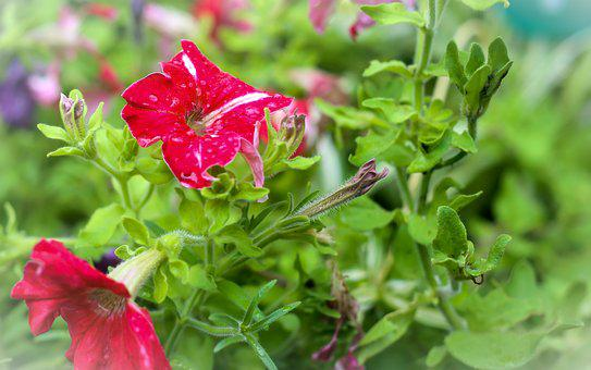 Flowers, Red, Nature, Garden, Plant, Floral, Green