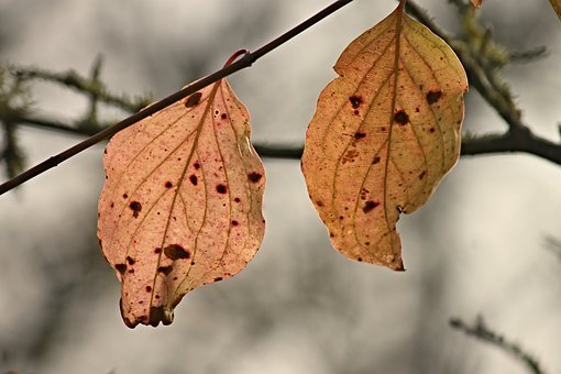 Fall Foliage, Leaves, Two, Stains, Hanging, Depend