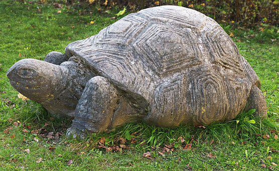 Turtle, Stone Figure, Sculpture, Stone Statue, Animal