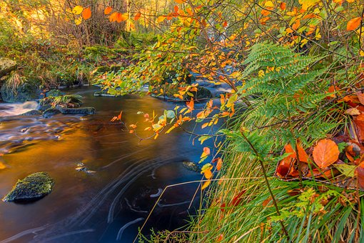 Autumn Leaves, Fall Leaves, Yorkshire, Hidden, Stream