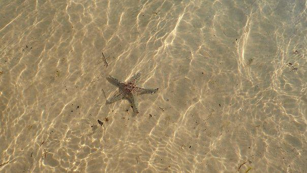 Sand, Starfish, Vacation, Summer, Beach, Sea, Travel