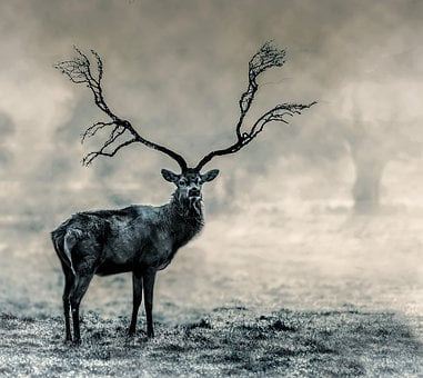 Stag, Wildlife, Nature, Deer, Male, Black And White