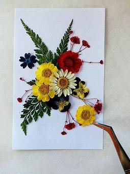 Pressed Flowers, Colorful, Dry Flowers, Art, Diy