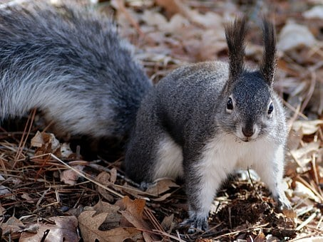 Squirrel, Nature, Outside, Close-up, Macro, Wildlife
