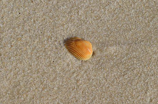 Yellow Shell In Wet Sand, Shell, Sand, Beach, Travel