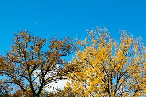 Autumn, Trees, Blue Sky, Moon, Sickle, Day, Colorful