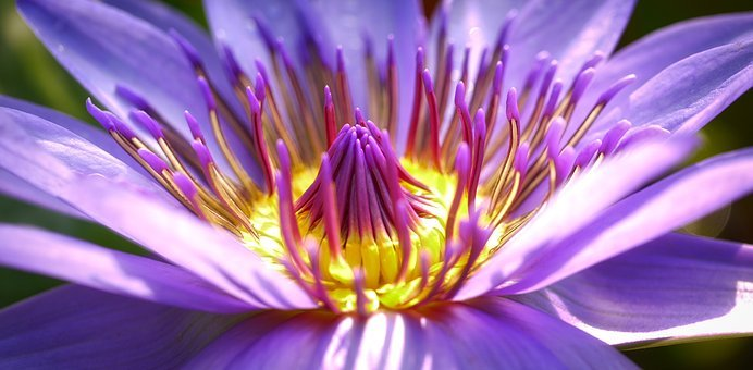 Flower, Blossom, Bloom, Nature, Purple Flower, Close