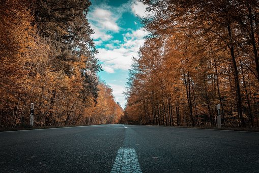 Road, Autumn, Trees, Forest, Golden October, Autumn Day
