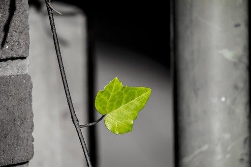 Leaf, Green, Nature, City Green, Green Leaf, Plant