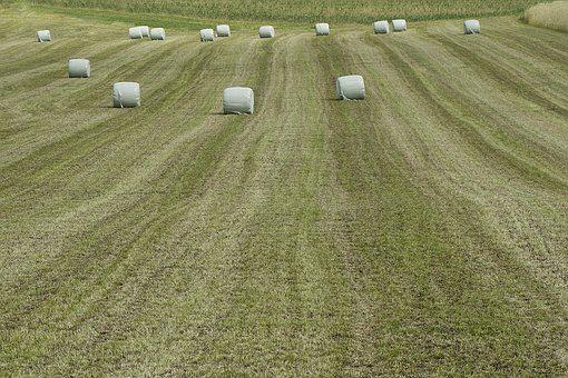 Agriculture, Harvest, Field, Winter Feed, Bale, Mowing