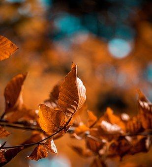 Leaves, Leaf, Forest, Autumn, Bokeh, Fall Foliage