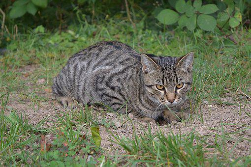 Cat, Sit, Mackerel, Animal, Domestic Cat