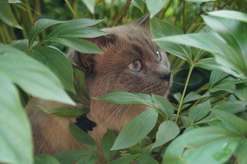 Green, Cat, Animal, Domestic Cat, Pet, Mammal, Eyes