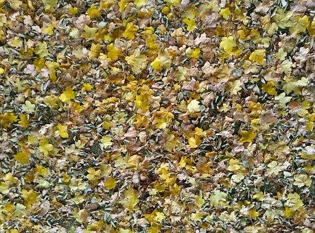 Leaves, Texture, Autumn, Soil, Natural Texture