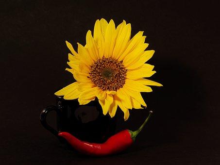 Nature, Flower, Yellow, Chili, Red, Bloom, Season