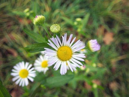 Flower, Fine Jet, Pointed Flower, Plant, Yellow, White