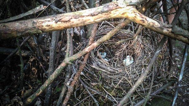 Socket, Birds, Bird's Nest, Eggs, Thrush, Branches