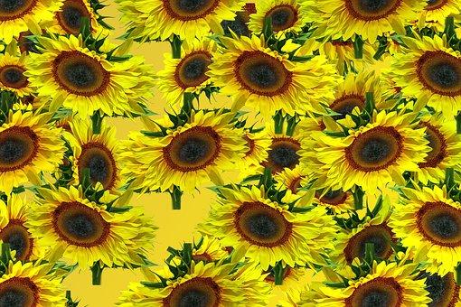 Sun Flower, Pattern, Background, Texture, Yellow