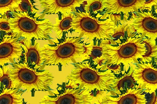 Sun Flower, Pattern, Background, Texture, Yellow
