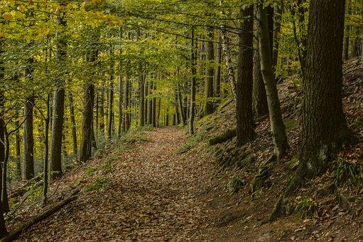 Forest, Autumn, Leaves, Golden Autumn, Trees