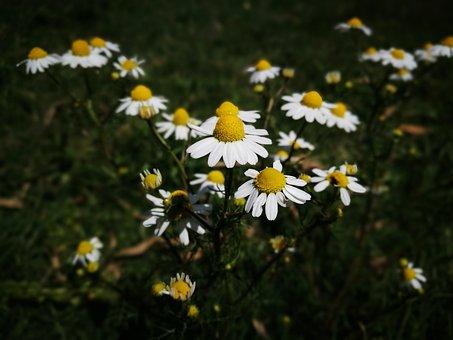 Flower, Flowers, White, Yellow, Armonia