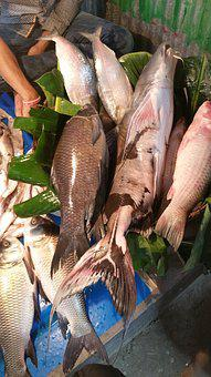 Fish, Asia, Bangladesh