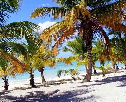 Palm, Beach