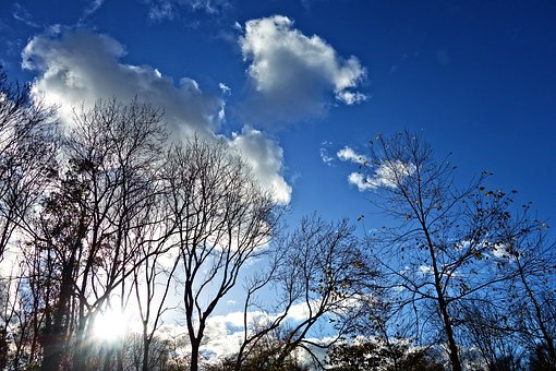 Trees, Treetops, Branches, Silhouette, Blue Skies