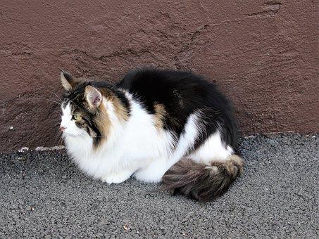 Cat, Cats, Cute Cat, Pets, Closeup