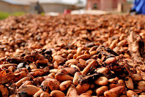 Cocoa Beans, Drying, Ghana, Food, Cocoa, Ingredient