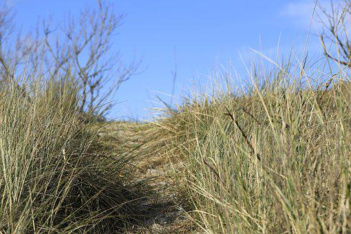 Dunes, Beach, Sea, Denmark, Grass, Sand Beach