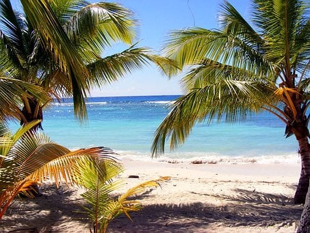 Beach, Palm Tree, Dominika, Exotic