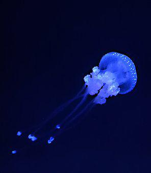 Jellyfish, Ocean, Aquarium, Landscape, Nature, Fish