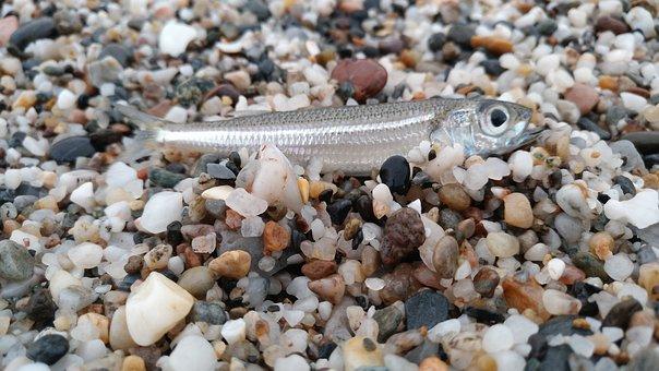 Fish, Sand, Stones, Small Fish