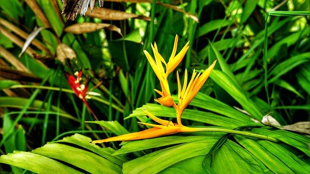 Bird Of Paradise, Flower, Tropical, Paradise, Plant