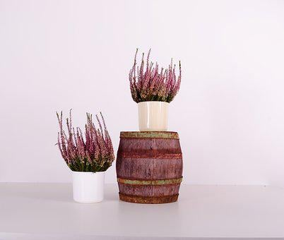 Flowerpots, Plastic, Color, Home, Indoor, Flower
