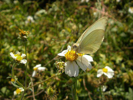 Butterfly, Insect, Flowers, Spring, Nature, Beauty