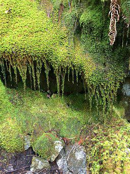 Moss, Rain, Forest, Green, Plant, Nature, Water