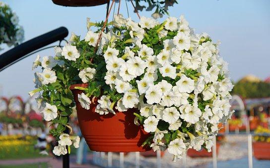 White Flower, Garden, Green, Nature, Light, White