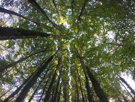 Trees, Oaks, Holm, Autumn, Plants, Nature, Leaves