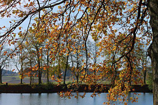Landscape, Autumn Landscape, Lake, Trees, Leaves