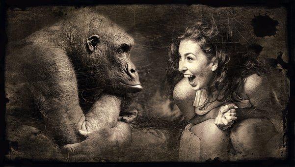 Composing, Monkey, Woman, Laugh, Old Photo, Sepia
