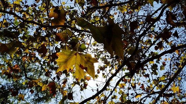 Leaves, Dried, Winter, Foliage Dries, Dry Leaf