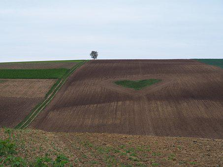 Love, Heart, Field, Romance, Agriculture