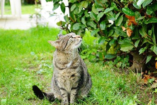 Cat, Meadow, Domestic Cat, Curious, Black, Garden
