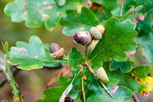 Forest, Autumn, Mushroom, Nature, Autumn Forest
