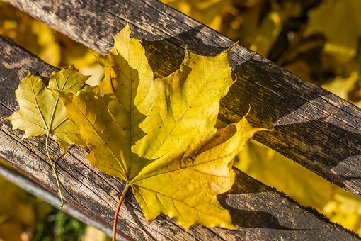 Autumn, Holidays, Yellow, Nature, Autumn Leaf