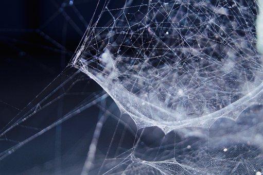 Web, Network, Link