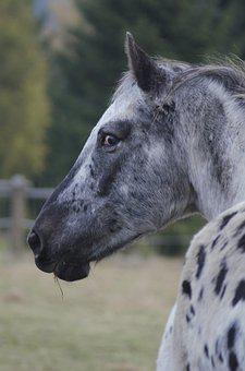 Horse, Outdoors, Nature